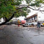 Un antiguo árbol cayó en calle Alsina